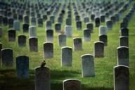 Cemetery Photo Swap