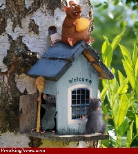 Bird House ATC