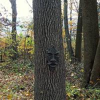 Strange Trees Photo Swap!
