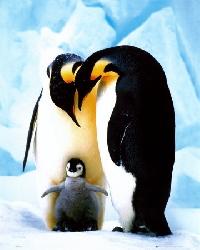 ATC- Penguin