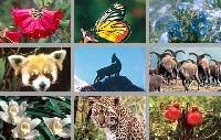 Flora & Fauna postcard swap