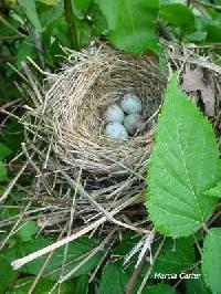 Birds & Spring Lucky Parcel