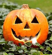 Spooky Halloween Card Swap