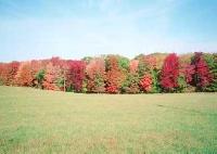 Autumn Colors Card Swap