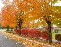 Autumn ATC swap!