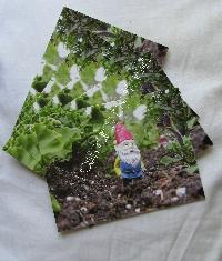 Gnome Post Card swap