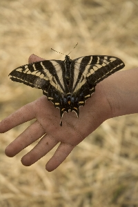 I Never Saw Another Butterfly - The Butterfly Proj