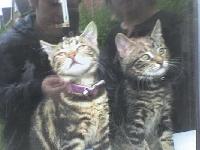 kitty katt postcard