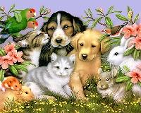 Pet Store Goodies!