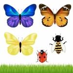 ATC Addicts - Ephemera + Insect ATC