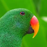 Green Inchie swap