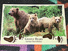 ANIMAL postcard swap